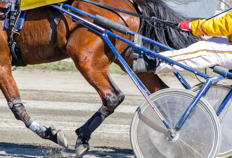 harness-racing-racing-horse-harnessed-to-lightweight-strollers-1